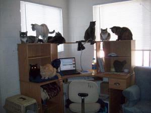 The Command Center of 'The Mittens Chronicles'